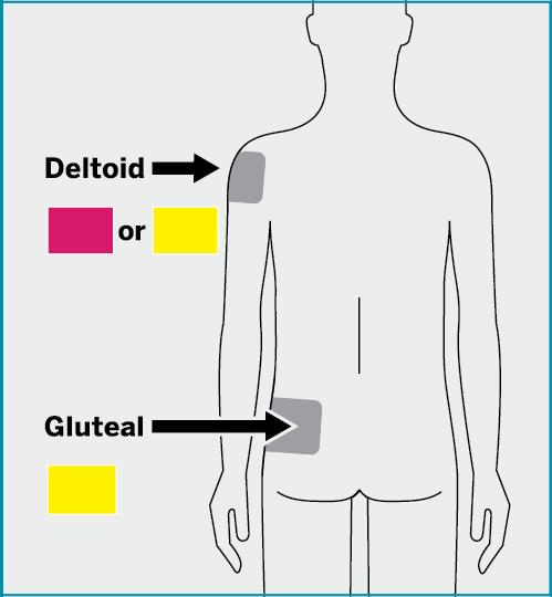 deltoid-or-glute